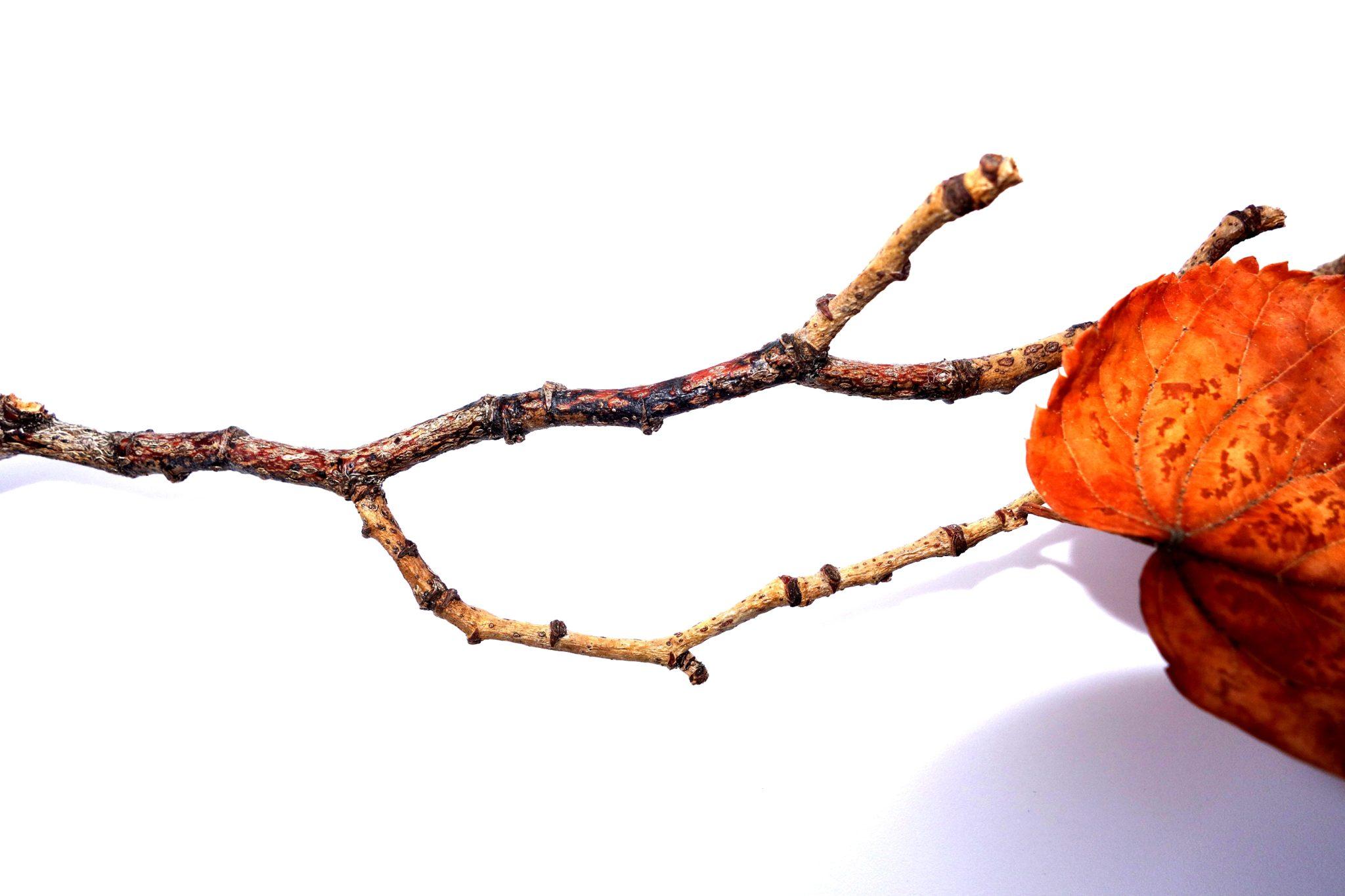branch 6